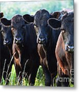 The Posers Metal Print by Rebecca Pickrel