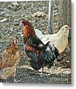 The Rooster And His Hens Metal Print by Artist and Photographer Laura Wrede