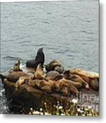 The Sea Lion And His Harem Metal Print by Mary Machare