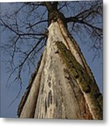 The Strange Tree Metal Print by Guy Ricketts