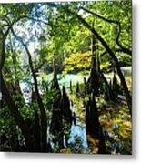The Swamp By The Springs Metal Print by Julie Dant