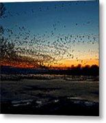The Swarm Metal Print by Matt Molloy
