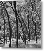 The Way You Move Me Metal Print by Laurie Search