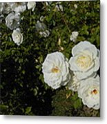 The White Rose Is A Dove Metal Print by Kay Gilley