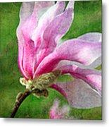 The Windblown Pink Magnolia - Flora - Tree - Spring - Garden Metal Print by Andee Design