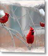 Three Cardinals In A Tree Metal Print by Dan Friend