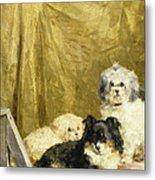 Three Dogs Metal Print by Charles van den Eycken
