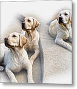Three's Company Metal Print by Peter Chilelli