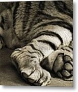 Tiger Paws Metal Print by Dan Sproul