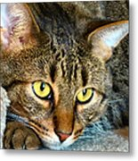 Tiger Time Metal Print by Michelle Milano