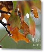 Tiny Leaf Metal Print by Barbara Shallue