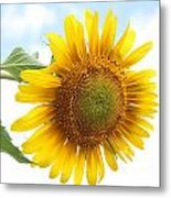 Tipping Over Metal Print by Kerri Mortenson
