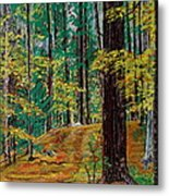 Trail At Wason Pond Metal Print by Sean Connolly