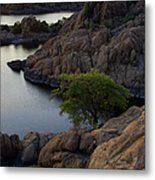 Tree At Sunset At The Granite Dells Arizona Metal Print by Dave Dilli