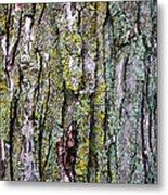 Tree Bark Detail Study Metal Print by Design Turnpike