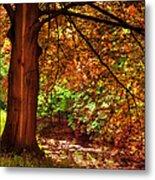 Tree In The Park. De Haar Castle. Utrecht  Metal Print by Jenny Rainbow