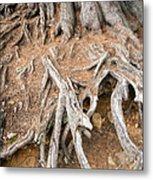 Tree Root Metal Print by Matthias Hauser