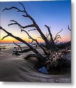 Trees At Driftwood Beach Metal Print by Debra and Dave Vanderlaan