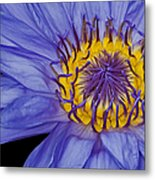 Tropical Day Flowering Waterlily Metal Print by Susan Candelario