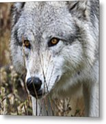 Trying To Hide D9884 Metal Print by Wes and Dotty Weber