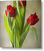 Tulipa Metal Print by Jacky Parker