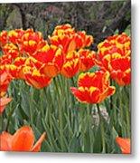 Tulips From Brooklyn Metal Print by John Telfer