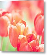 Tulips In The Sun Metal Print by Kay Pickens