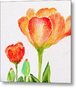 Tulips Orange And Red Metal Print by Ashleigh Dyan Bayer