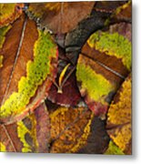 Turning Leaves 4 Metal Print by Stephen Anderson