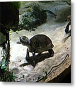Turtle - National Aquarium In Baltimore Md - 121218 Metal Print by DC Photographer