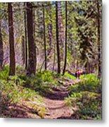 Twisp River Trail Metal Print by Omaste Witkowski