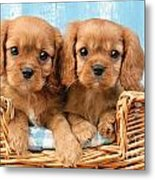 Two Puppies In Woven Basket Dp709 Metal Print by Greg Cuddiford