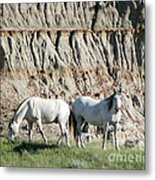 Two Wild White Stallions Metal Print by Sabrina L Ryan