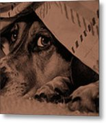 Undercover Hound Metal Print by Paul Wash
