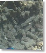 Underwater - Long Boat Tour - Phi Phi Island - 011356 Metal Print by DC Photographer