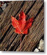 Uniquely Red Metal Print by Pamela Baker