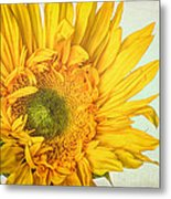 Unrivaled Metal Print by Heidi Smith