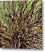 Uprooted Metal Print by Adam Jewell