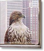 Urban Red-tailed Hawk Metal Print by Rona Black