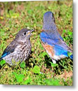 A Mothers Care Metal Print by David Lee Thompson