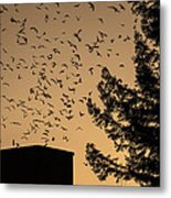 Vaux's Swifts In Migration Metal Print by Garry Gay