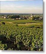 Vineyard And Village Of Pommard. Cote D'or. Route Des Grands Crus. Burgundy.france. Europe Metal Print by Bernard Jaubert