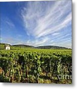 Vineyard Hut. Vineyard. Cote De Beaune. Burgundy. France. Europe Metal Print by Bernard Jaubert