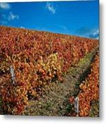 Vineyard In Negotin. Serbia Metal Print by Juan Carlos Ferro Duque