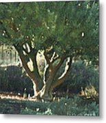 Vineyard Olive Metal Print by Artist and Photographer Laura Wrede