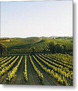 Vineyard Patchwork Metal Print by Clint Brewer