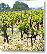 Vineyard With Young Plants Metal Print by Susan  Schmitz