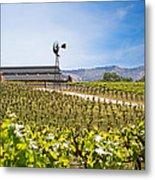 Vineyard With Young Vines Metal Print by Susan Schmitz