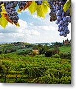 Vineyards In San Gimignano Italy Metal Print by Susan Schmitz