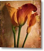 Vintage Calla Lily Metal Print by Jessica Jenney